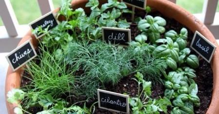 Herb Planting Workshop