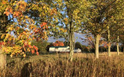 October and November at Sherwood Farm